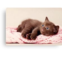 funny furry kitten Canvas Print