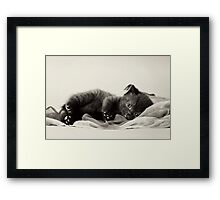 Black fluffy kitten Framed Print