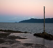 Resting ~ Flying Fish Point Sunset by Kerryn Madsen-Pietsch