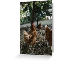 a chook's view! Greeting Card