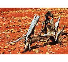 desert driftwood Photographic Print