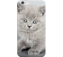 Gray fluffy kitten  iPhone Case/Skin