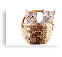 Two fluffy kitten in a basket Canvas Print