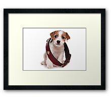 Jack Russell Terrier puppy and a large collar Framed Print