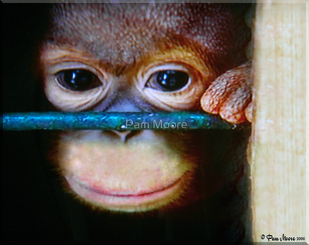 No Monkey Business by Pam Moore