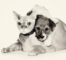 Cat and puppy by utekhina