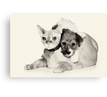 Cat and puppy Canvas Print