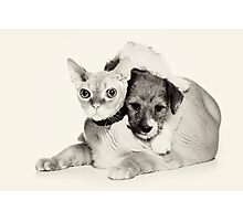 Cat and puppy Photographic Print