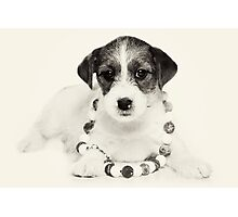 Puppy Jack Russell Terrier and beads Photographic Print