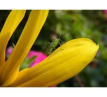 Leaf Beetle Photographic Print