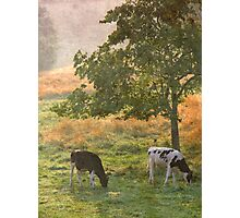 In the Pasture Photographic Print