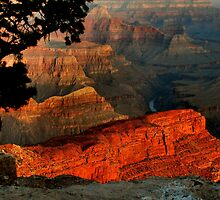 Grand Canyon At Dawn by Stephen Vecchiotti