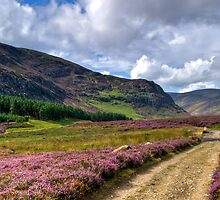 Walking Glen Mark by Panalot