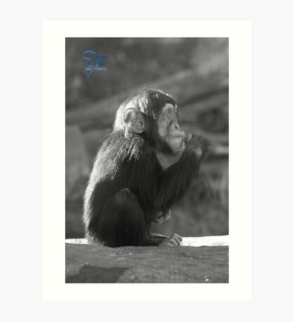 Life Is Like A Monkey Art Print