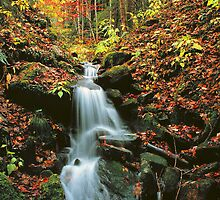 MOUNTAIN STREAM,AUTUMN by Chuck Wickham