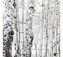 White Tree 2 Photographic Print