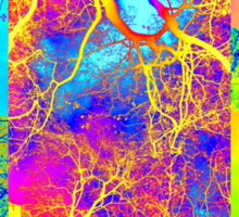 tree of life collage Sticker