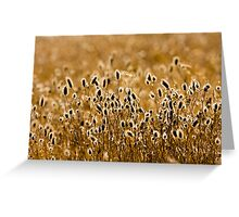 gold of autumn  Greeting Card