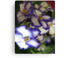 Baby Violets Canvas Print