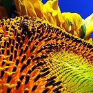 Sunshine Honey by Visual   Inspirations