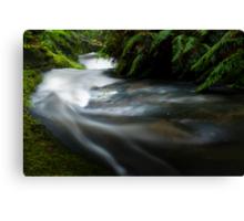 Small stream in the Tangarakau Gorge Canvas Print
