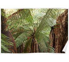 Tree [man] Ferns Poster