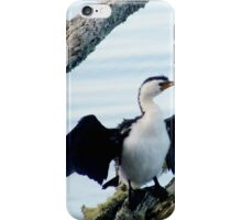 The Little Shag at Tauranga Harbour New Zealand iPhone Case/Skin