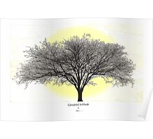 canopied solitude Poster