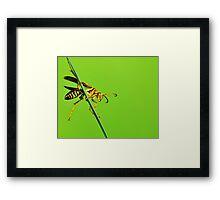 Summer sting Framed Print
