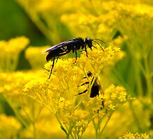 Wasp and Bumble by JRCollection