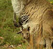 joey in pouch by prdirect