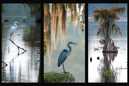 Cypress Island Trio by Bonnie T.  Barry