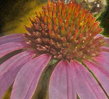 Bee the Coneflower  by Isa Rodriguez