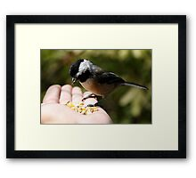 Small Seeker of Sunflower Seeds Framed Print