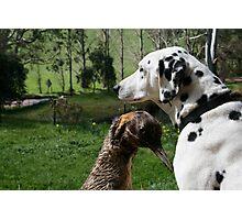 Sammi's new friend Chuck Photographic Print