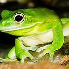 White lipped Tree Frog by MrBennettKent