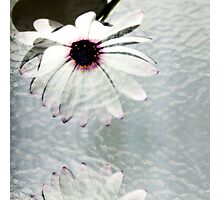 Flower Art Photographic Print