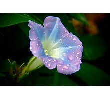 Wild Flower from Nature Photographic Print