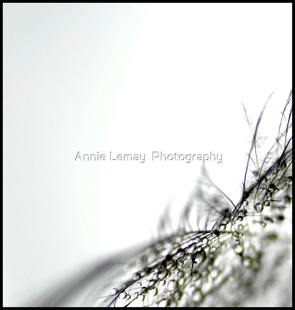The Gift by Annie Lemay  Photography