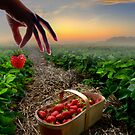 Sunset Harvest by Igor Zenin