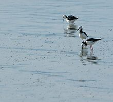 Sea Birds 5 by fotoWerner