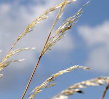 Tall grass and blue sky Sticker