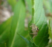 Spiders Eye by Adi Hamzah