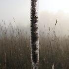 web encassed long grass by cherylsnake