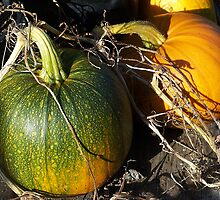 Pumpkins by Jonice
