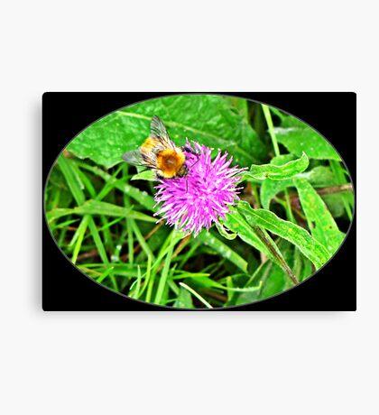 Bumble bees Canvas Print