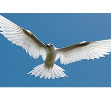 Open Wings of a Tern - Cocos (Keeling) Islands Photographic Print