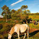White Pony by Mark Waugh