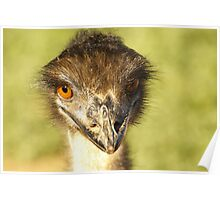 Emu at Garden Route Poster