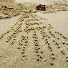 Crab trails at Krabi, Thailand by webgrrl